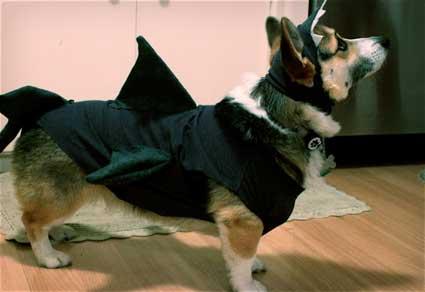 DIY Dog Shark Costume