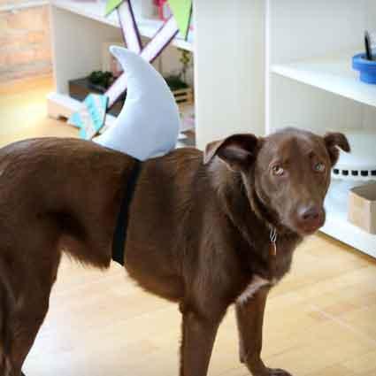 DIY Shark Fin for Your Dog