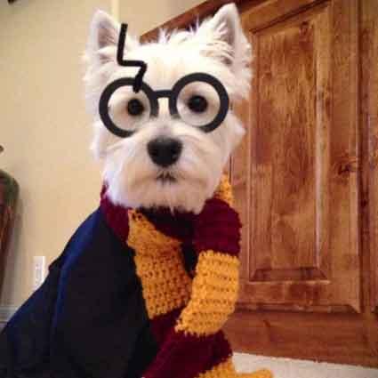 harry potter dog