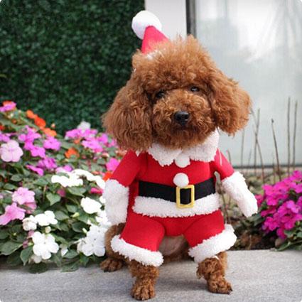 Santa Dog Suit