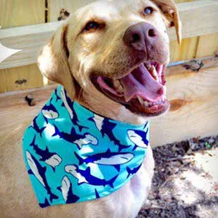 Shark-Tastic Dog Bandana