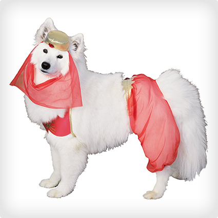 Harem Dog Costume