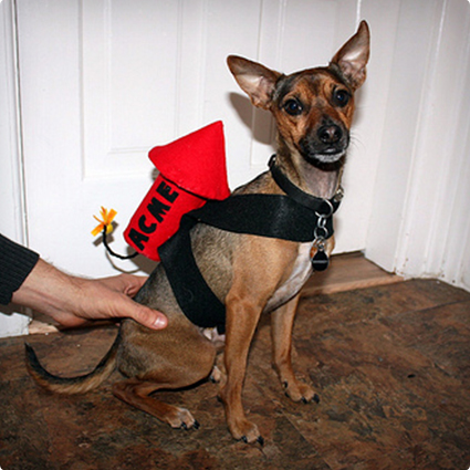 Wile E Coyote Dog Costume