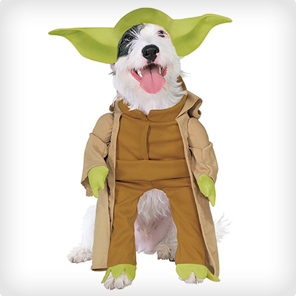 Dog Breeds With Yoda Ears