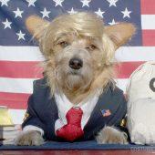 Barney the Billionaire Dog Costume