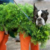best dogs halloween costumes