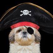 dog pirate costumes