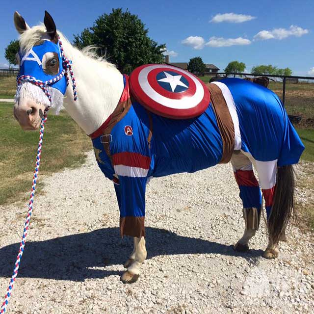 DIY Captain America Horse Costume