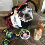 Abby Sciuto NCIS Forensic Scientist Dog Costume