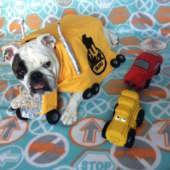 diy mack truck bulldog costume
