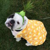 pineapple bulldog costume