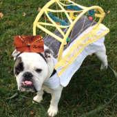 bridge dog costume